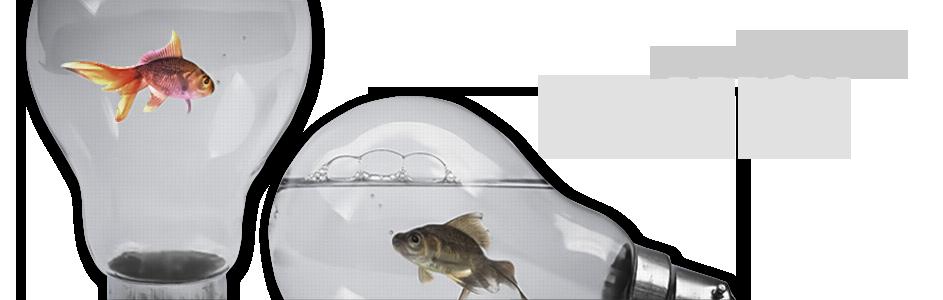fish_slider2